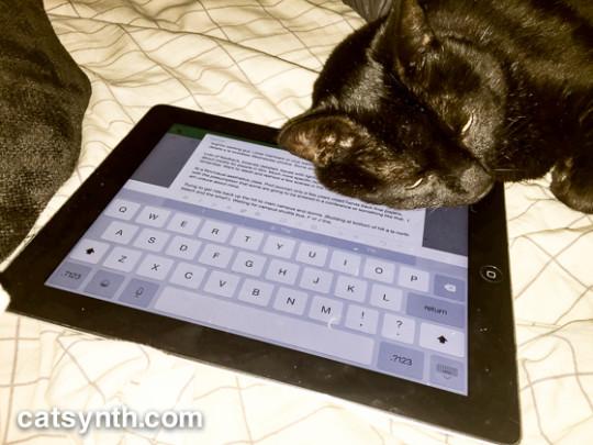 Luna the cat and iPad
